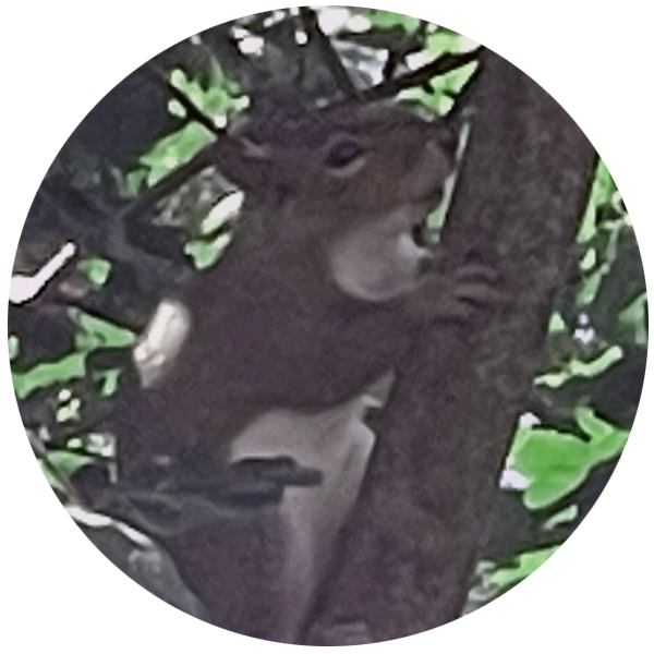Cyril the Squirrel, CEO (Chief Eating Officer)